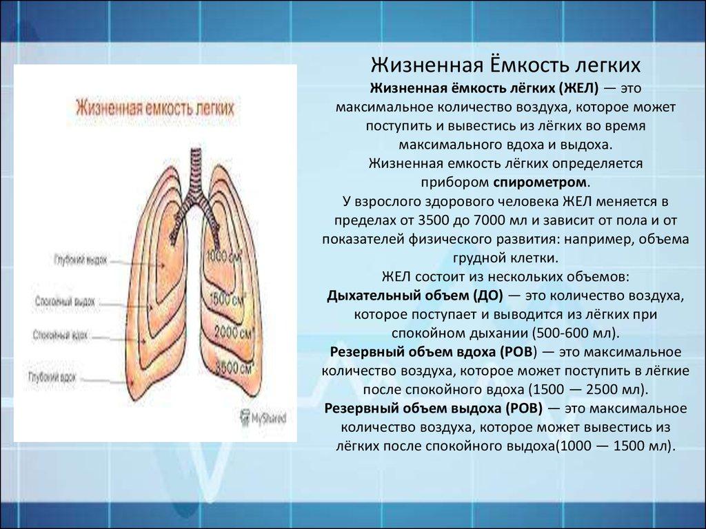 Понятие о жизненной емкости легких. нервная и гуморальная регуляция дыхания. гигиена дыхания