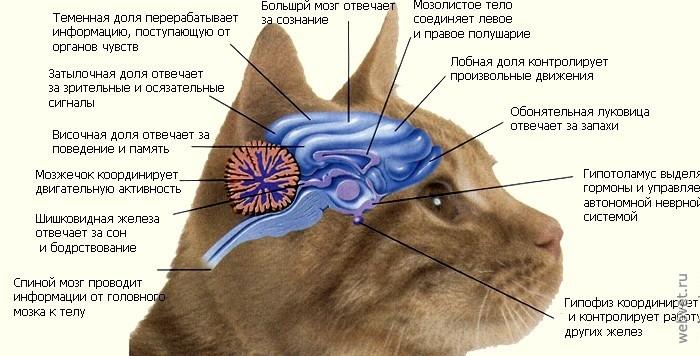 Этология - это наука обо всех видах врождённого поведения животных и людей