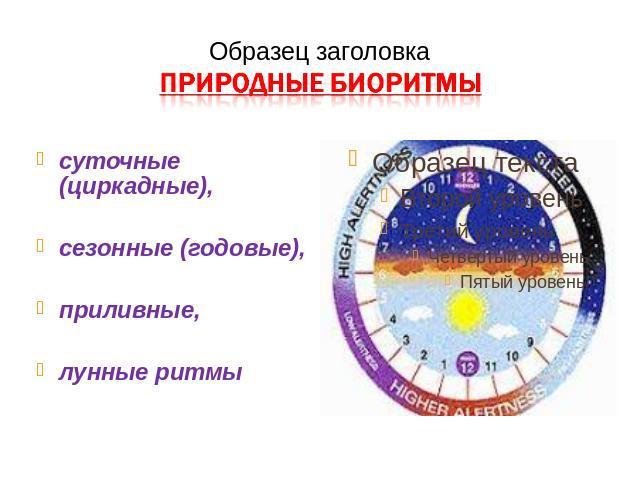 Биологические ритмы в жизни человека, биоритмы организма – подробно, по часам, за время суток