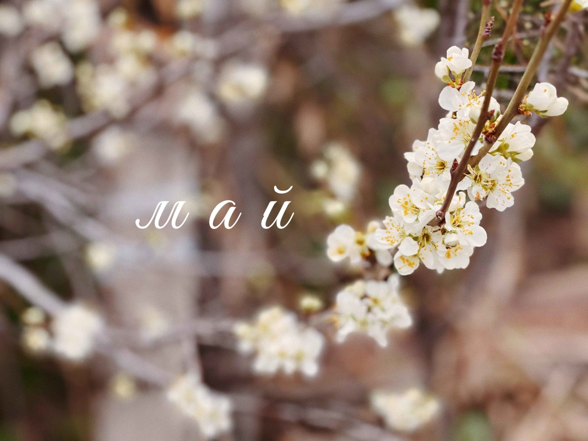 Значение имени май: что означает, происхождение, характеристика и тайна имени