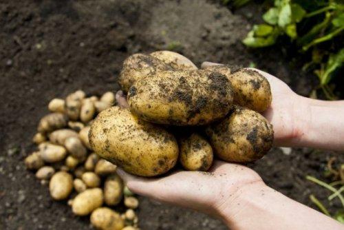 Пестициды в овощах и фруктах: как определить и как избавиться дома