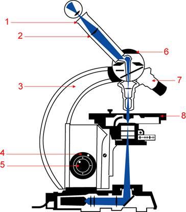Микроскоп. история создания, устройство, правила работы