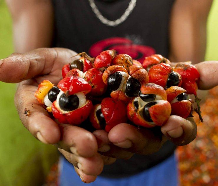 Гуарана что это такое, польза и вред экстракта guarana для человека | alkopolitika.ru