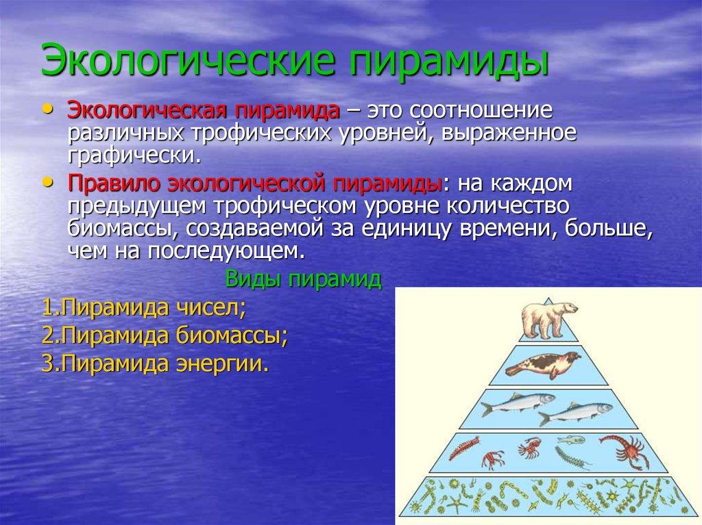 Пищевые цепи. экологическая пирамида – opiq