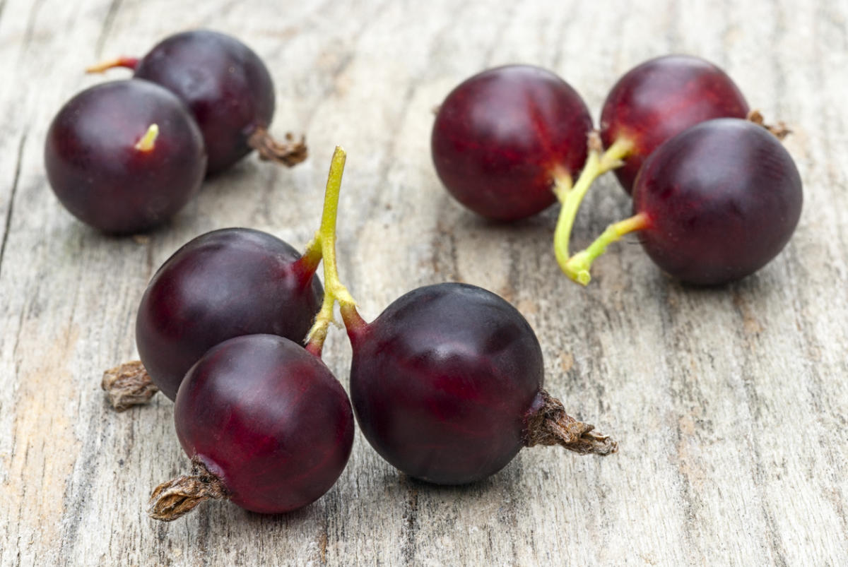 Йошта: полезные свойства и противопоказания ягоды
