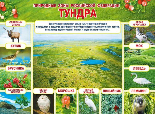Тайга россии: животные, растения и люди, живущие в тайге