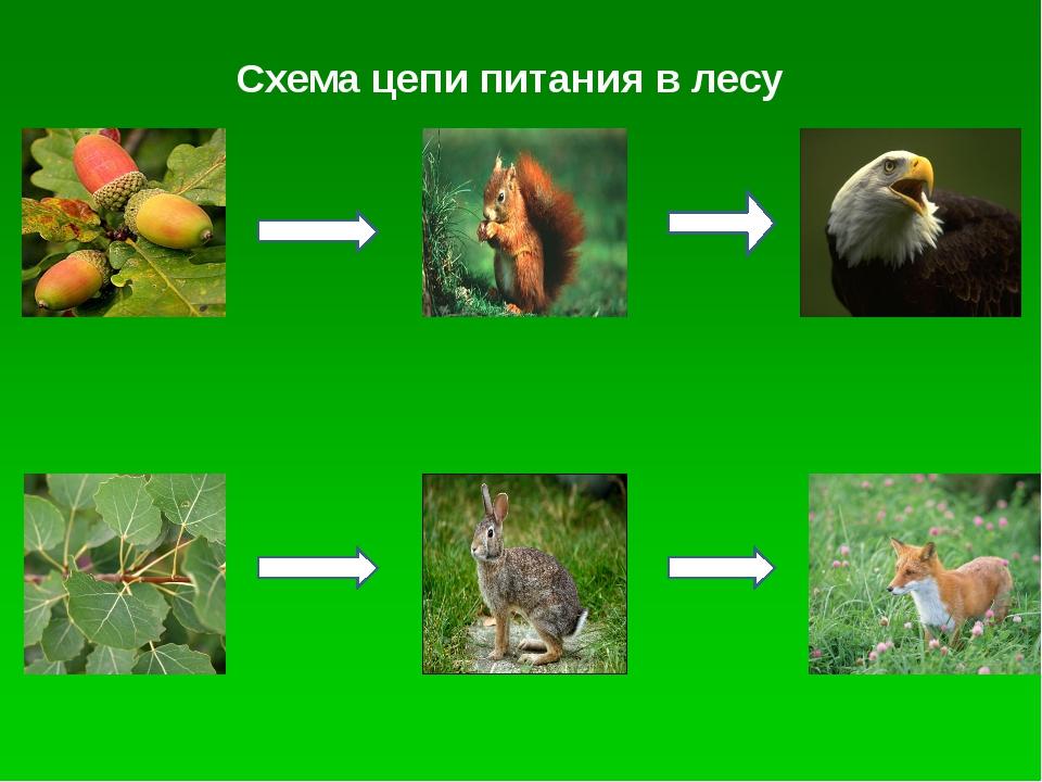 Цепи питания в биологии