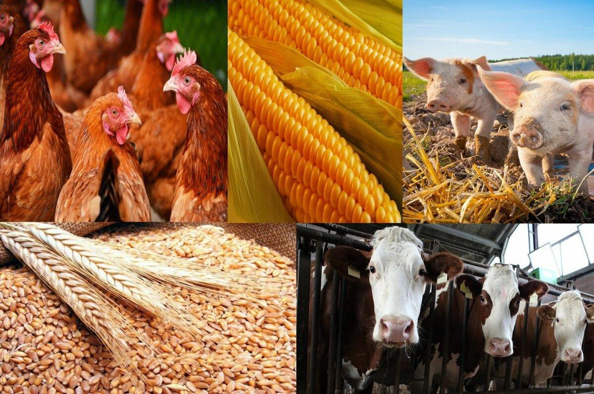 Что такое животноводство  - развитие, продукция, отрасли и области животноводства, проблемы и развитие