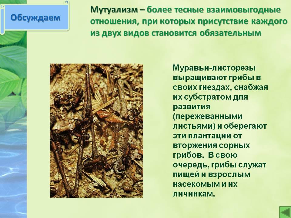 Мутуализм (биология) - mutualism (biology) - qwe.wiki