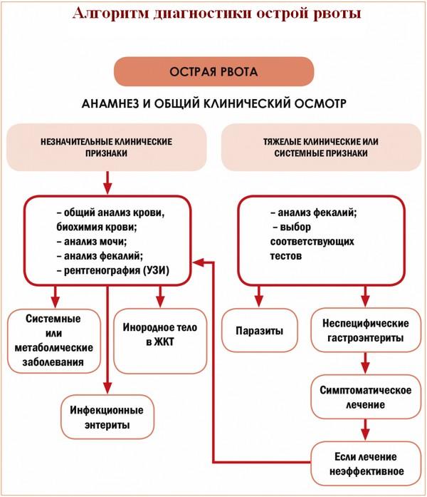 Энтерит - симптомы и лечение у взрослого человека, препараты