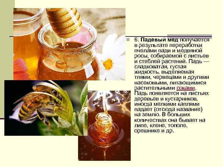 Падевый мед: что это такое, как отличить, польза и вред