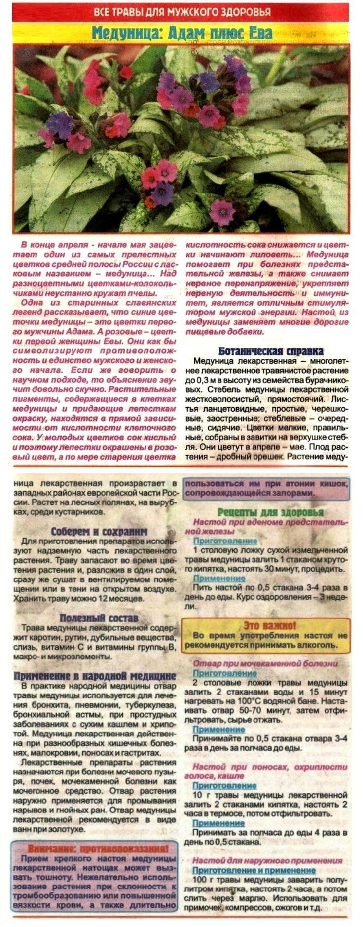 Растение датура (datura): полезные свойства дурмана и возможный вред от его употребления    что будет если съесть дурман