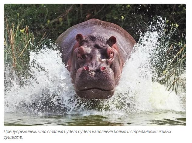 Животные, занесенные в черную книгу: почему вымерли представители фауны