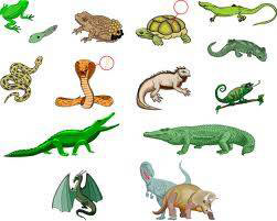 Сколько видов пресмыкающихся на земле: описание пресмыкающихся животных, список названий