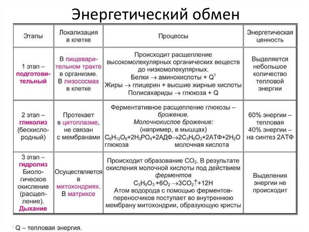 Энергетический обмен - что это и какие он имеет этапы :: syl.ru