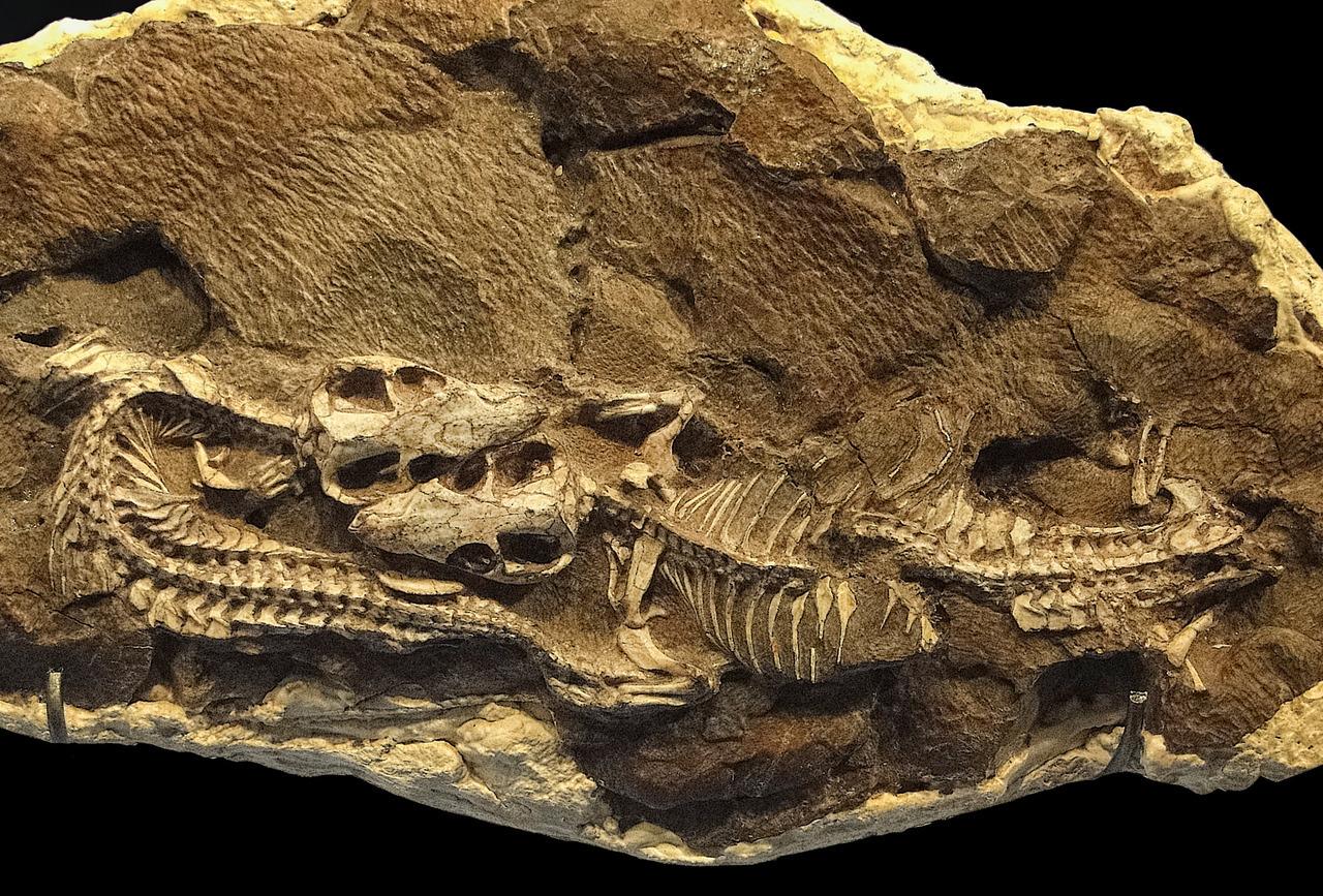 Профессия палеонтолог: где учиться, зарплата, плюсы и минусы