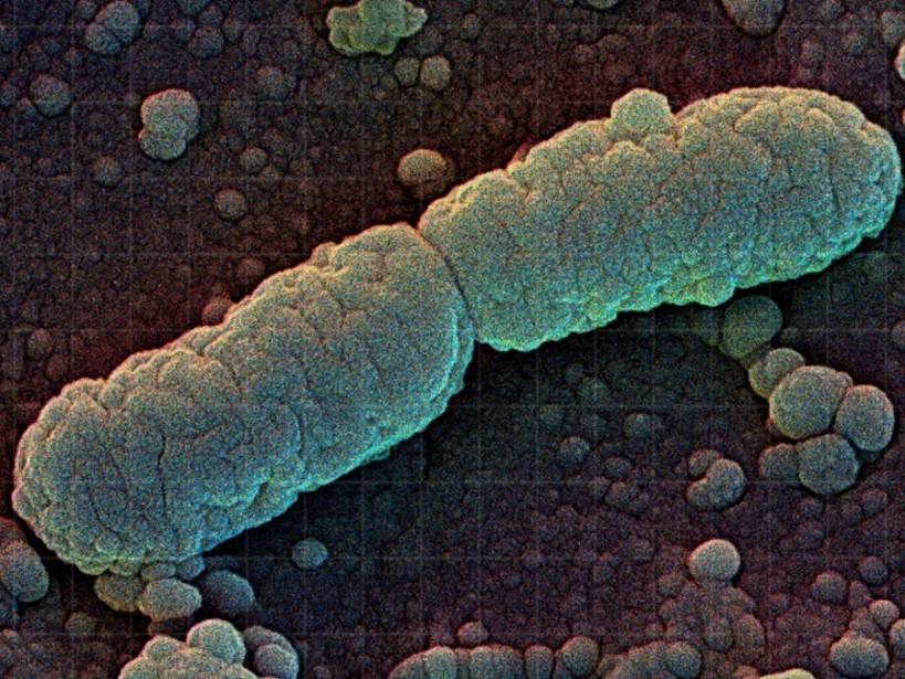 Прокариоты - это... прокариоты и эукариоты
