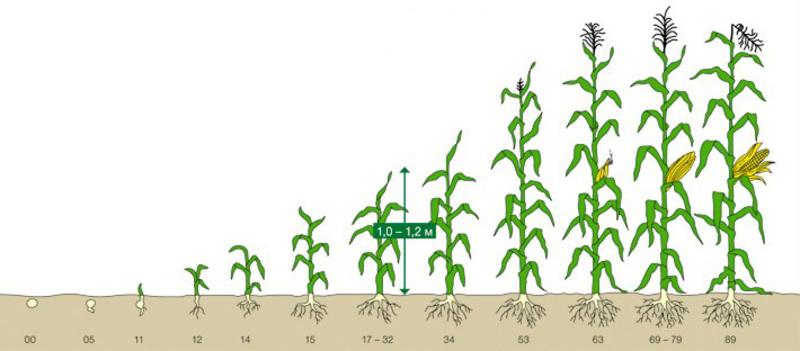 Чем опрыскивать смородину: можно ли опрыскать от вредителей весной и обрабатывать в период вегетации, организовывают ли обработку во время цветения