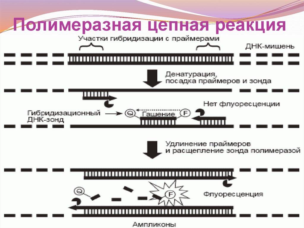 Как работает пцр реакция. real-time pcr | вмт