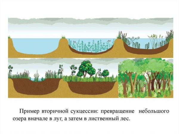 Экологическая сукцессия
