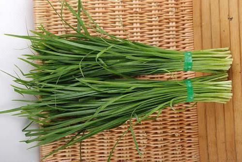 Что такое джусай: свойства, что можно приготовить из чесночной травы, рецепты из дикого лука, названия (душистый, корейский), выращивание из семян