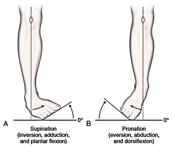 Супинация. для полноты тренировки мышц предплечий может оказаться весьма полезным знать, что такое пронация и супинация кисти.   здоровье человека