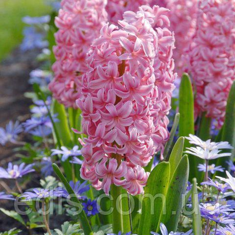 Что такое клубень? растения, относящиеся к клубневым