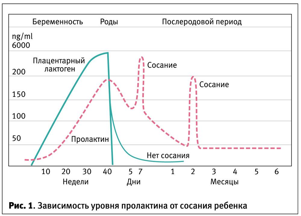 Окситоцин (гормон доверия): что это такое, функции, воздействие