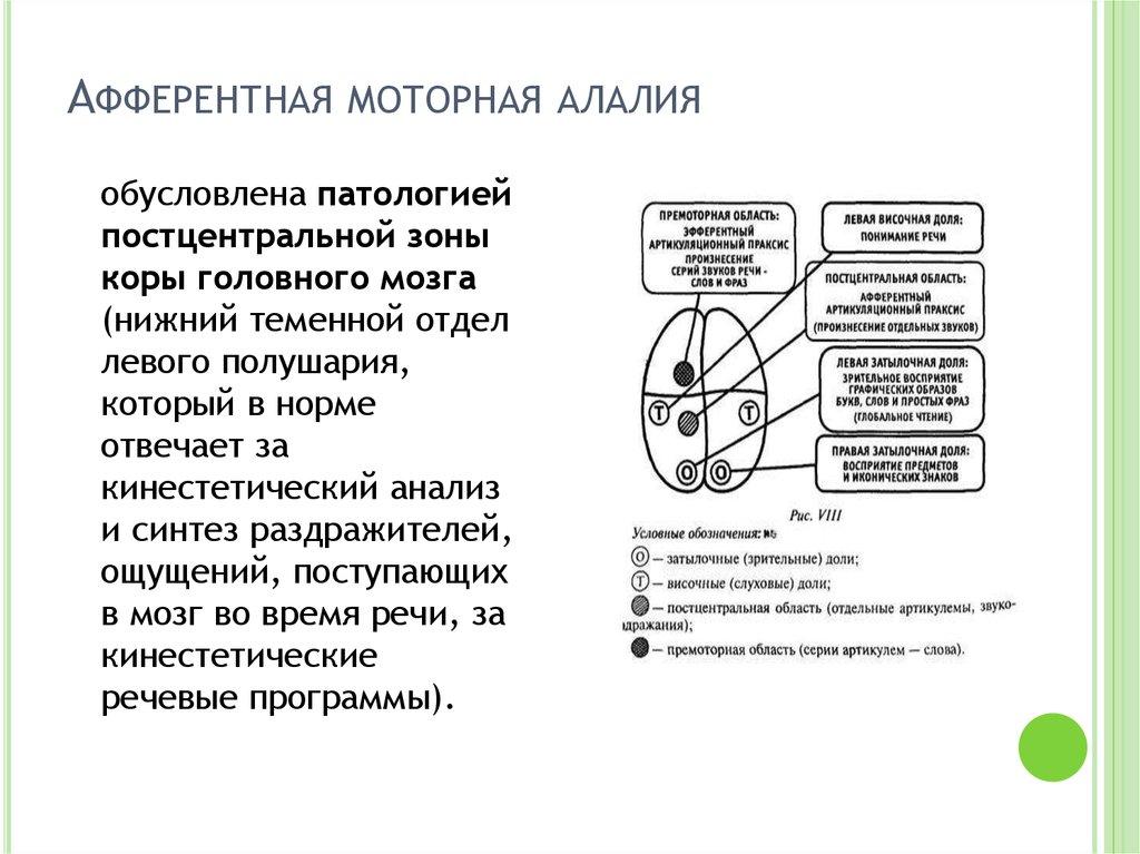 Алалия - что это такое: признаки, причины и классификация болезни, диагностика речевого нарушения