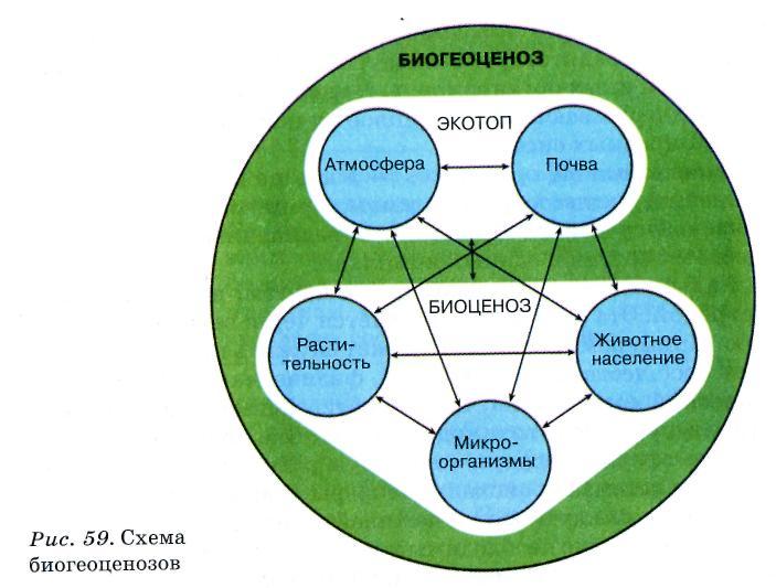 Биоценоз