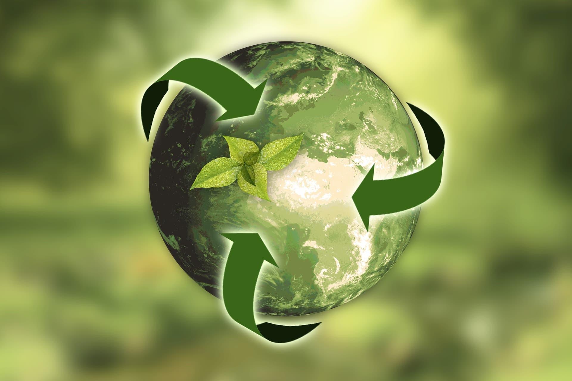 Что такое экология – значение, определение и виды  - «как и почему»