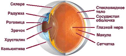 Кератотопография роговицы глаза: показания, методика проведения и возможные осложнениясложнения
