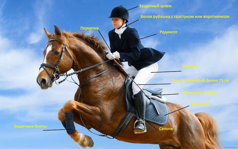 Как проходят соревнования по конкуру: секреты самого «прыгучего» конного спорта