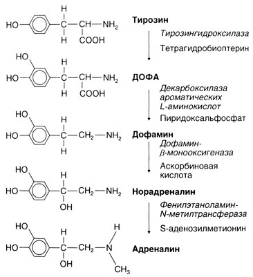 Катехоламины — википедия. что такое катехоламины