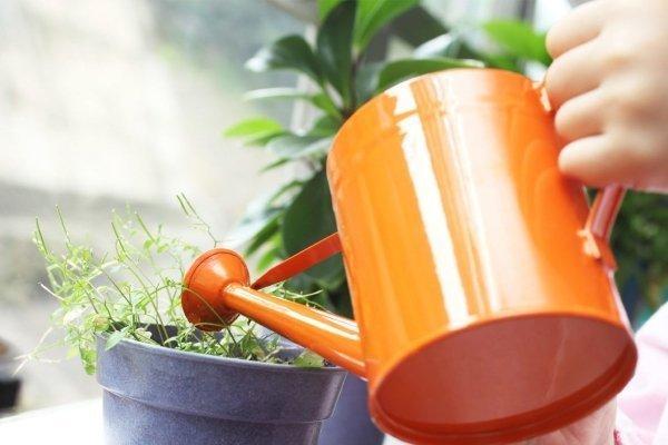 Вегетация растений – как ускорить процесс роста