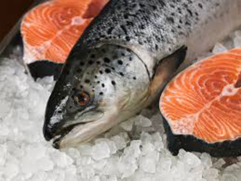 Кета морская или речная рыба