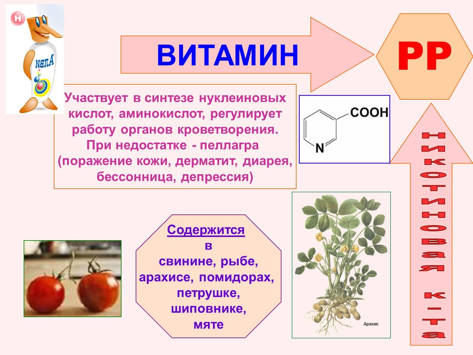 Никотиновая кислота – инструкция по применению витамина в3 (рр)