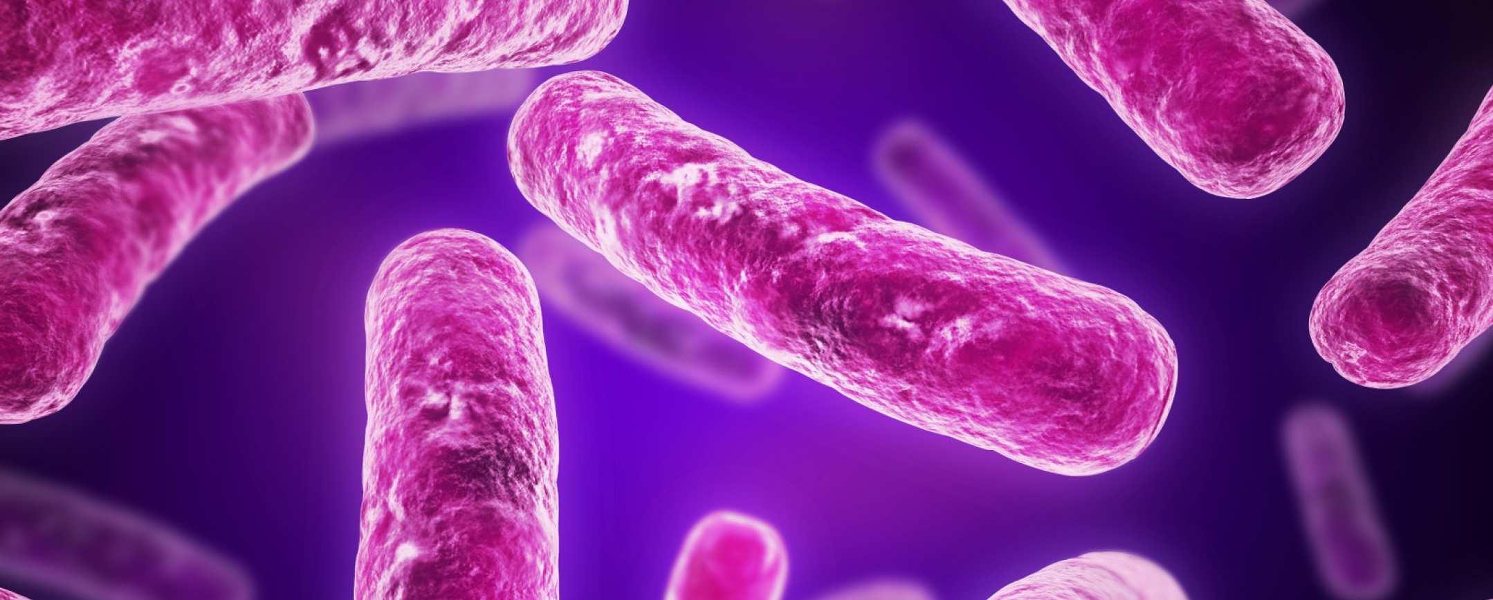 Возбудитель туберкулеза - пути заражения и живучесть бактерии, профилактика и методы терапии