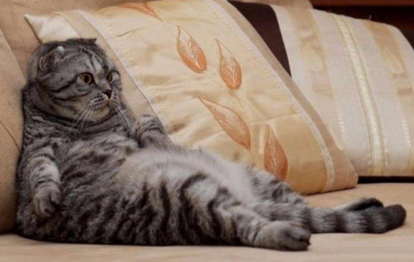 Стерилизация кошек: гуманный акт или узаконенная жестокость