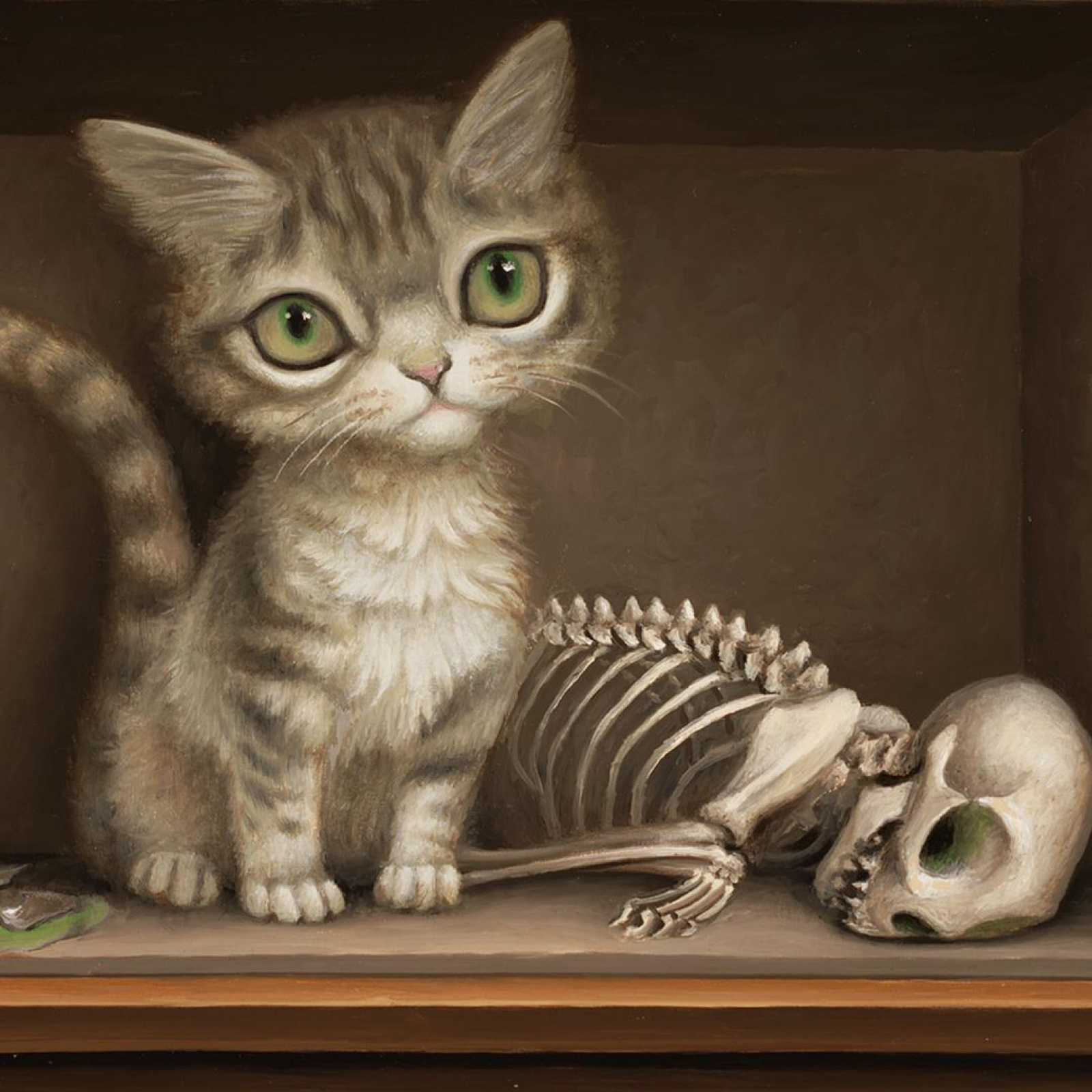 Кот шредингера: простыми словами (видео и факты)
