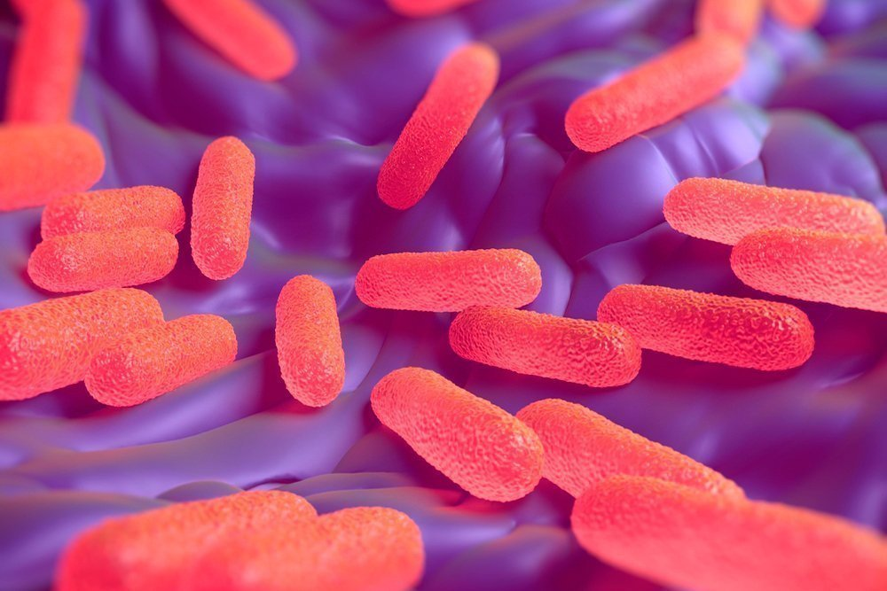 Сальмонелла: что это за бактерия, чем опасен сальмонеллез