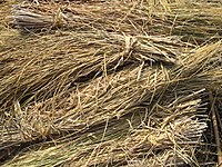 Как применять солому в виде удобрения осенью, какая польза и вред на огороде