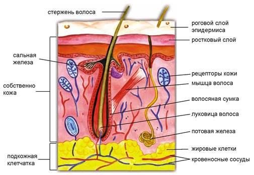 Кожа (материал) — википедия. что такое кожа (материал)