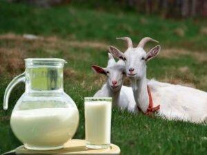 Топленое молоко: состав и польза. топленое молоко в домашних условиях. женский сайт www.inmoment.ru