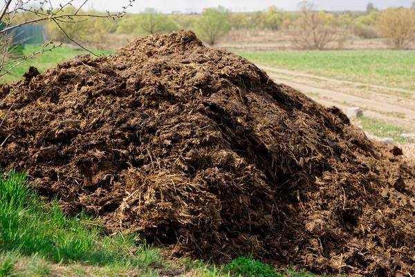 Каким навозом лучше удобрять огород: конским, коровьим или куриным?