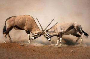 Конкуренция в бизнесе: определение, виды, плюсы и минусы
