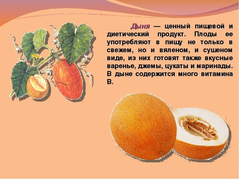 Дыня - это ягода или фрукт, как она растет, в чем ее польза и вред?
