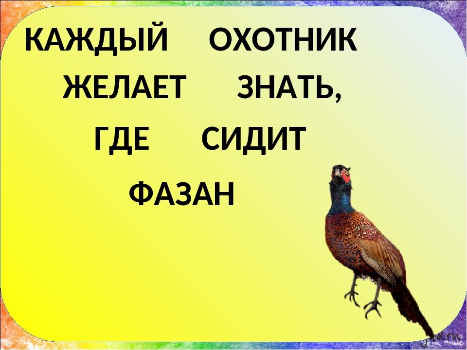 Каждый охотник желает. каждый охотник желает знать, где сидит фазан. метод лоций для запоминания цветов радуги