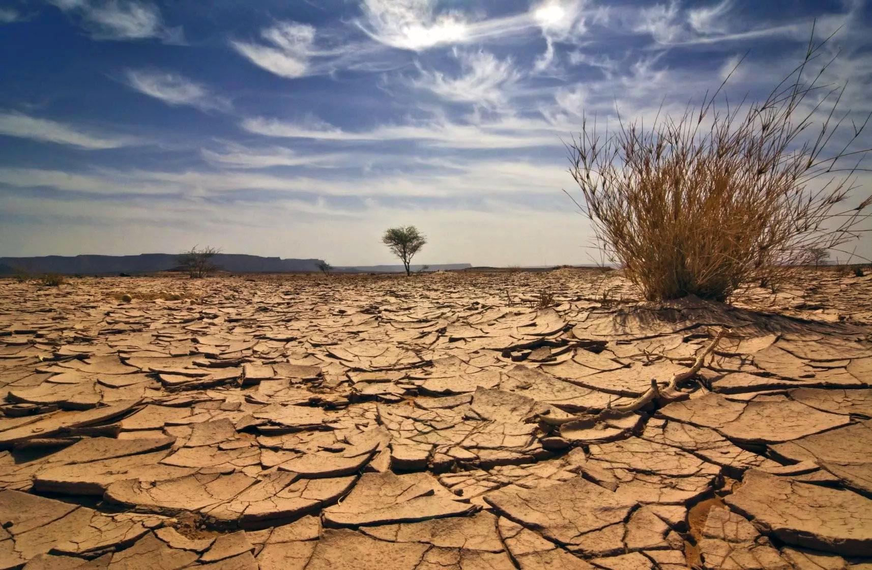 Опустынивание земель: проблемы, причины и борьба с опустыниванием