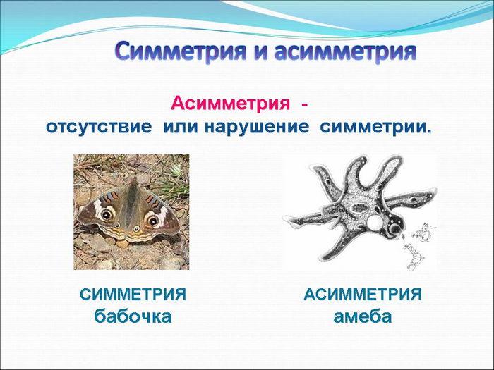 Симметрия (биология) — википедия. что такое симметрия (биология)